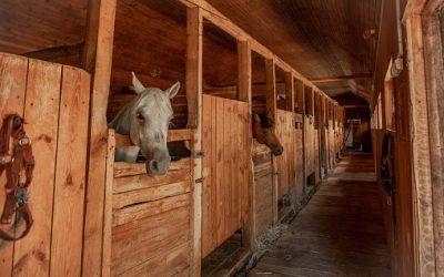 Hébergement d'un cheval : tout ce qu'il faut savoir
