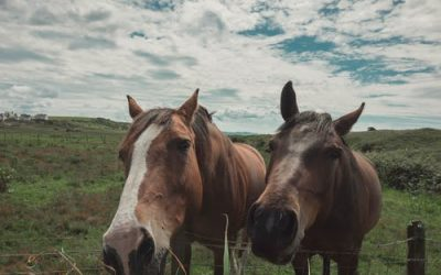 Ce que vous devez s'avoir sur l'alimentation du cheval