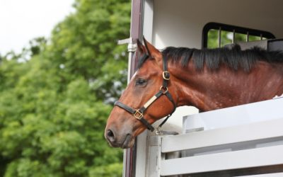 Protégez vos chevaux durant son transport