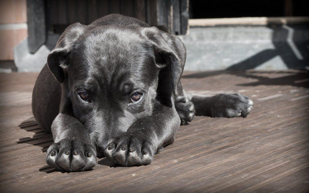 Adopter un chiot, comment en prendre soin ?
