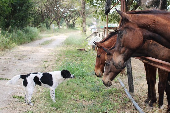 Quel chien adopter lorsque l'on a un cheval ?