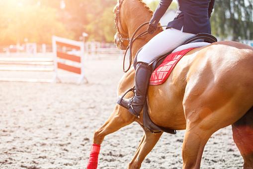 Comment entretenir son cheval?