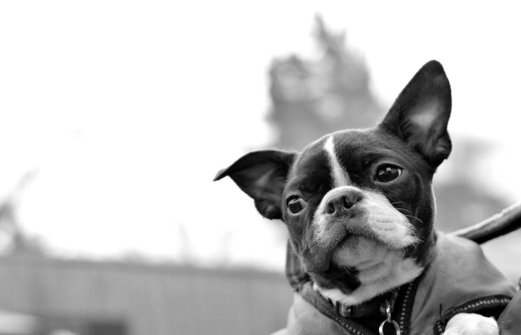Comment avoir des conseils de la part d'un vétérinaire rapidement ?